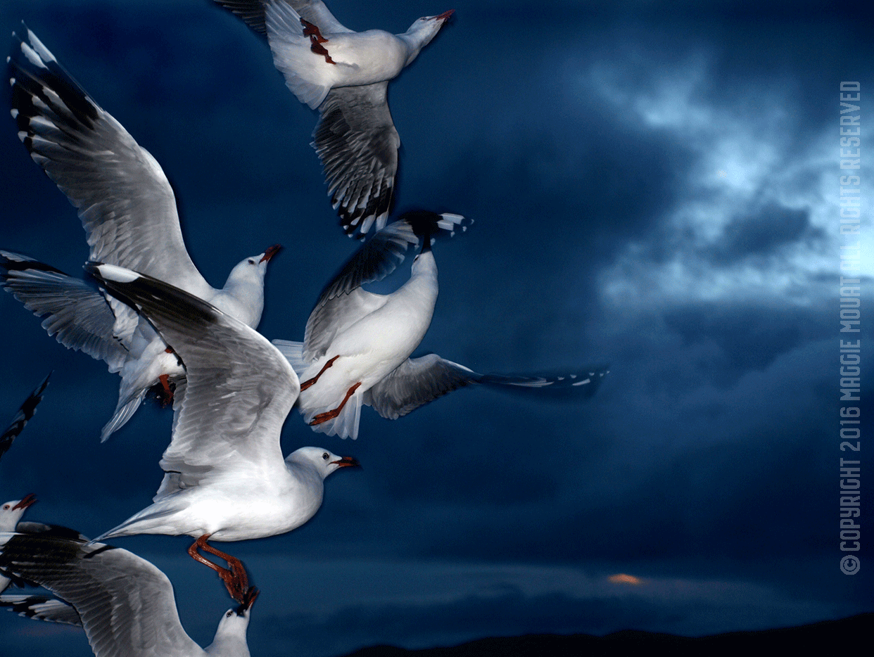 Group Gulls Sunset